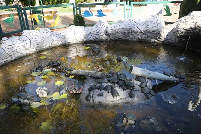 su kaplumbağaları havuzda