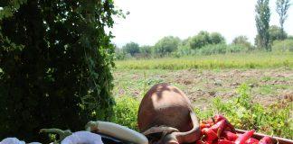 aydın tarım 1