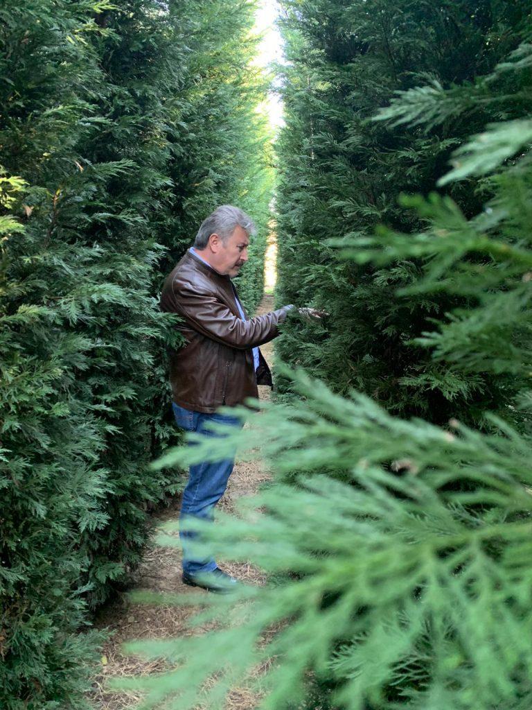 Melikgazi Ağaca Doyacak