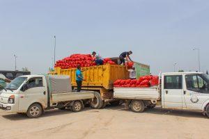 Karacabeyli çiftçiden 100 ton soğan 2