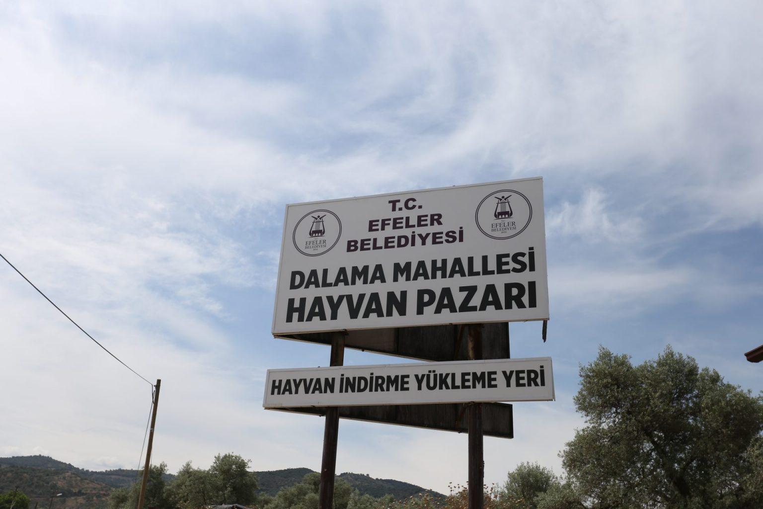 Dalama Hayvan Pazarı açıldı ozelkalem.com .tr 1