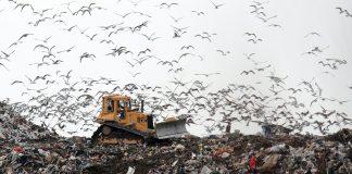 Hamitler çöplüğü