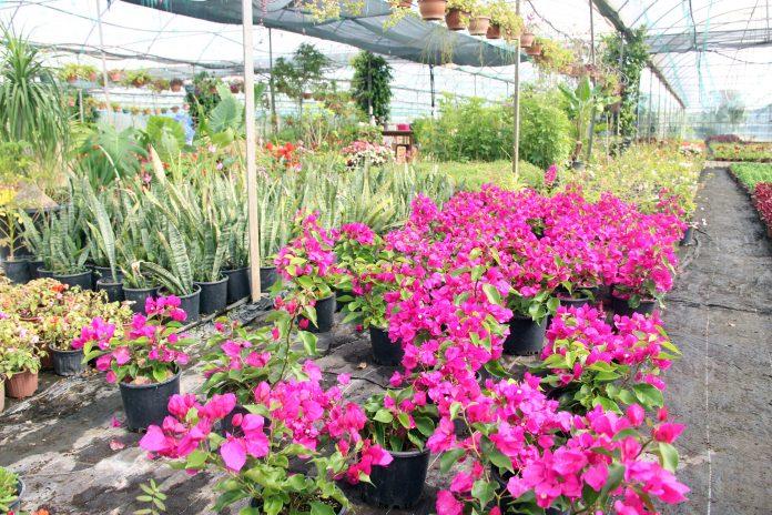 Muğla çiçek üretim merkezi oluyor