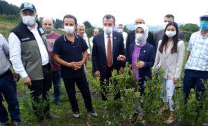 Büyükşehir'de yaban mersini hasadı başladı - ozelkalem.com.tr