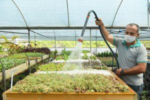 Konyaaltı Belediyesi 6 ayda 110 bin bitki üretti. - ozelkalem.com.tr