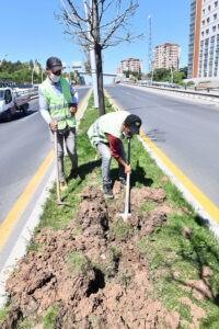 Ağaçların kuruma nedeni susuzluk değil beton! - ozelkalem.com.tr