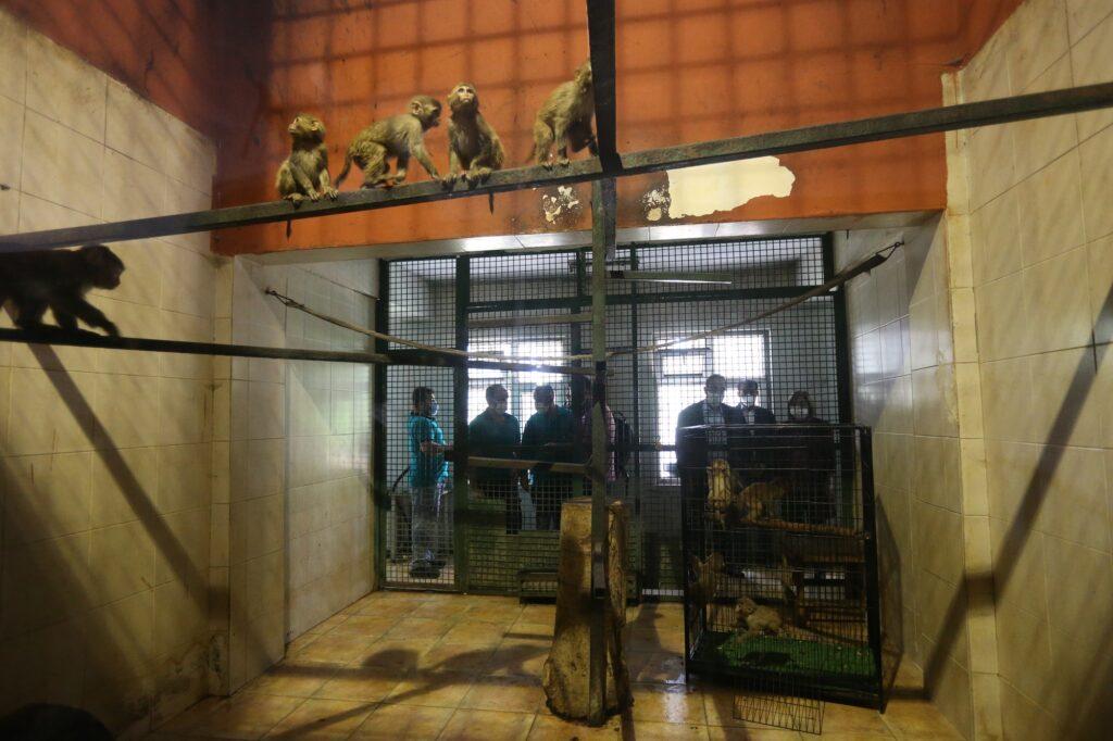 Gaziantep Hayvanat Bahçesi, yasa dışı yollarla Türkiye'ye sokulurken yakalanan 12 makak maymunu, 3 yılan ve 4 dikenli ejderin yeni yuvası oldu.