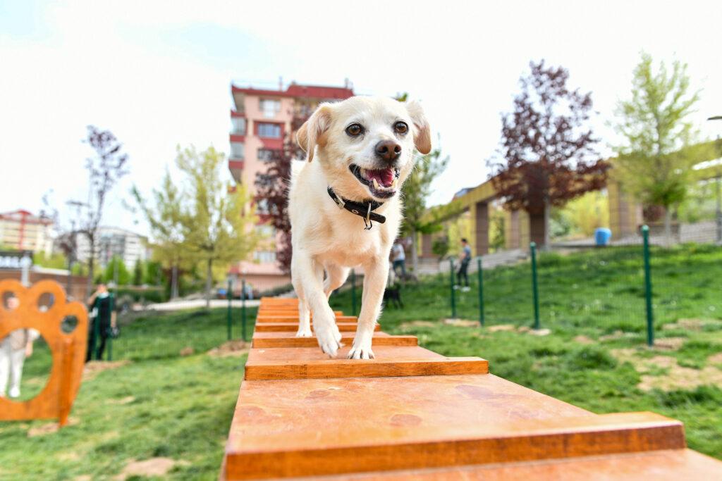 Ankara Büyükşehir Belediyesi, hayvan dostu projelerine bir yenisini ekledi.