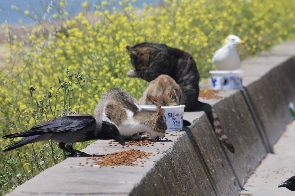 Kartal Belediyesi, tam kapanma döneminde sokak hayvanlarını unutmadı. Ekipler sokak hayvanlarının mama ve su ihtiyaçları için görev başında.