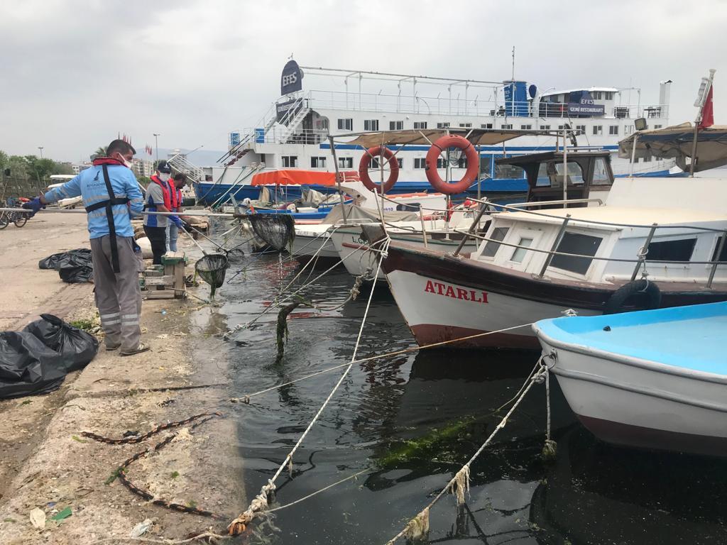 İzmir Büyükşehir, Körfez'de kıyılarında görülen ve 'deniz marulu' olarak bilinen 'ulva lactuca' adlı yeşil renkli yosunlar ile ilgili çalışma başlattı.